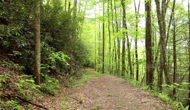 alergare în pădure