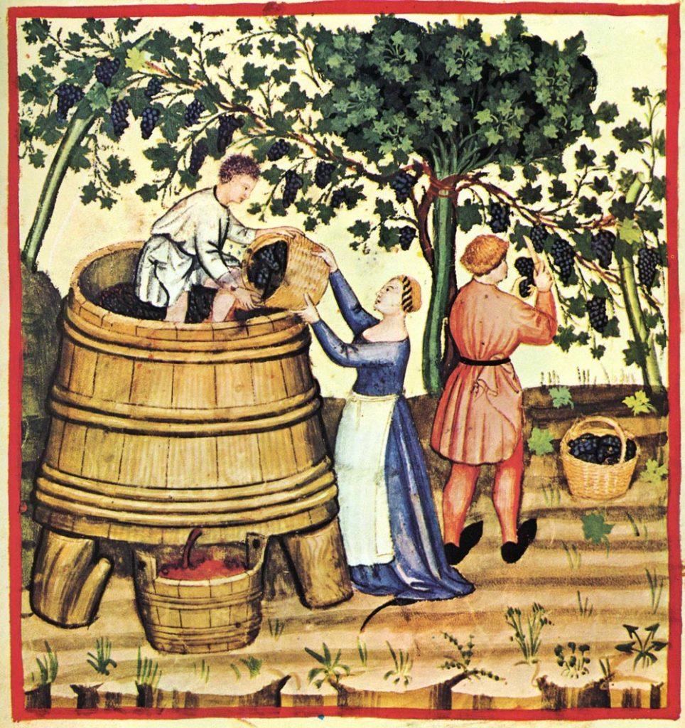 istorie vin
