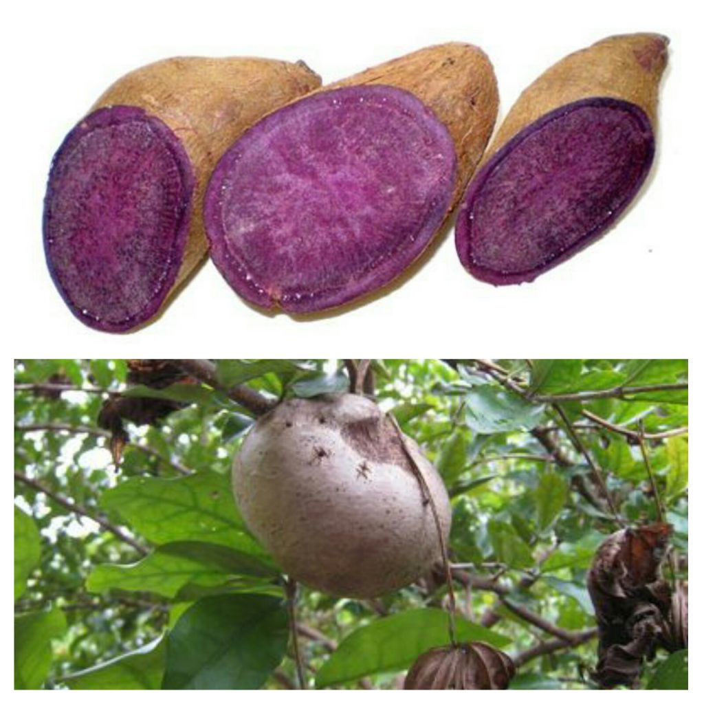 Purple yam sau ube din Filipine.